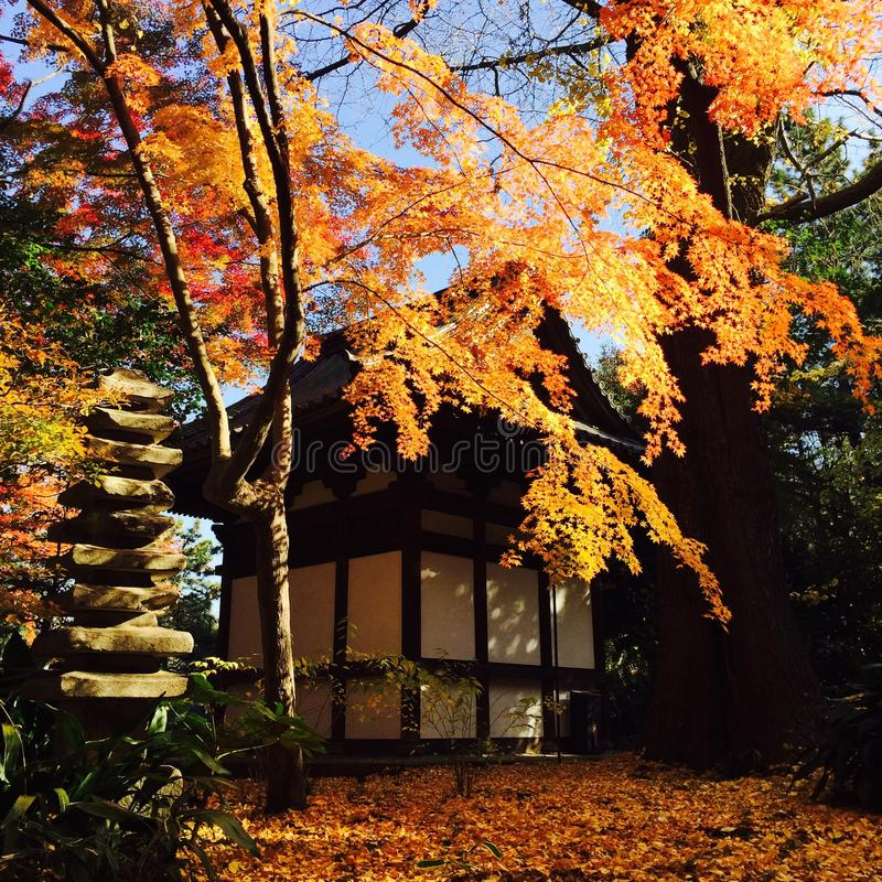 Japanse avonturen royalty-vrije stock foto