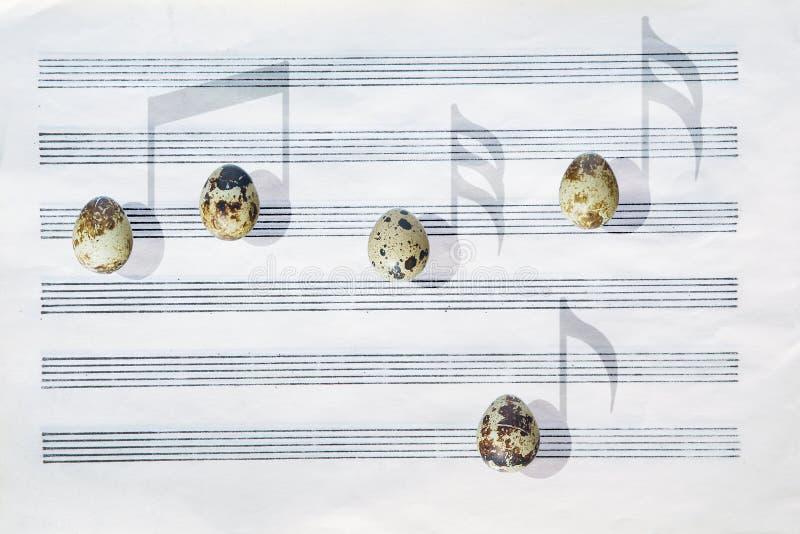 Japanse kwartelseieren Zes-staaf muziekdocument Schaduwen zoals muzieknoten stock foto