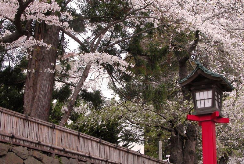 Japanse lantaarn in de lente royalty-vrije stock afbeeldingen