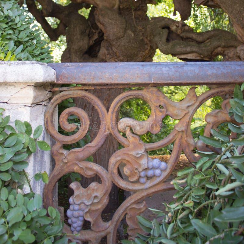 Japanse pagodeboom met oud metaal roestig traliewerk royalty-vrije stock afbeelding