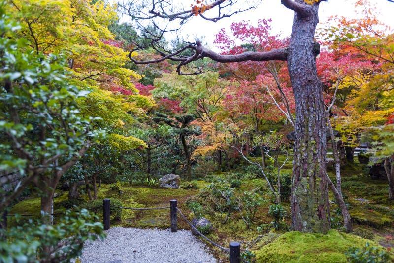 Japanse rode esdoornboom tijdens de herfst in tuin bij Enkoji-tempel in Kyoto, Japan stock afbeelding