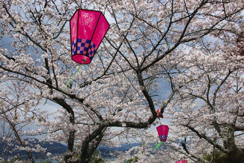 Japanse sakurabloesem en roze lantaarns royalty-vrije stock foto's
