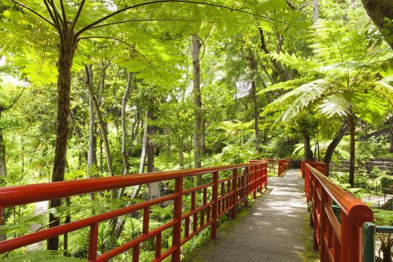 Japanse siertuin met weelderige varens, palmen, bomen stock foto's