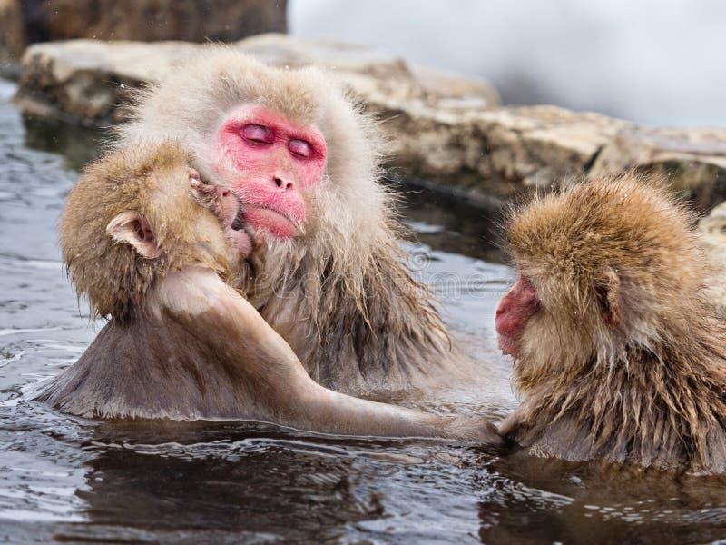 Japanse sneeuwapen royalty-vrije stock foto's
