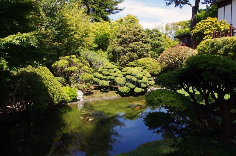 Japanse theetuin stock fotografie