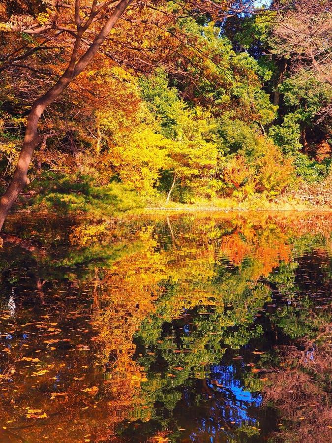 Japanse vijverbezinningen met schaduwen van greens, geel en sinaasappelen royalty-vrije stock fotografie