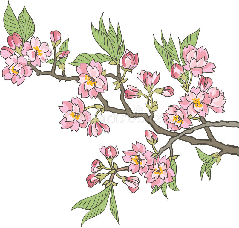 Japansk blomningkörsbär stock illustrationer