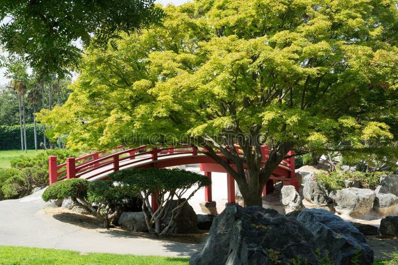 japansk designträdgård arkivfoton
