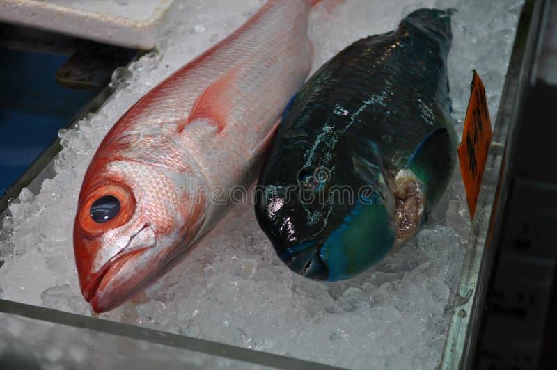 Japansk fiskmarknad royaltyfri foto