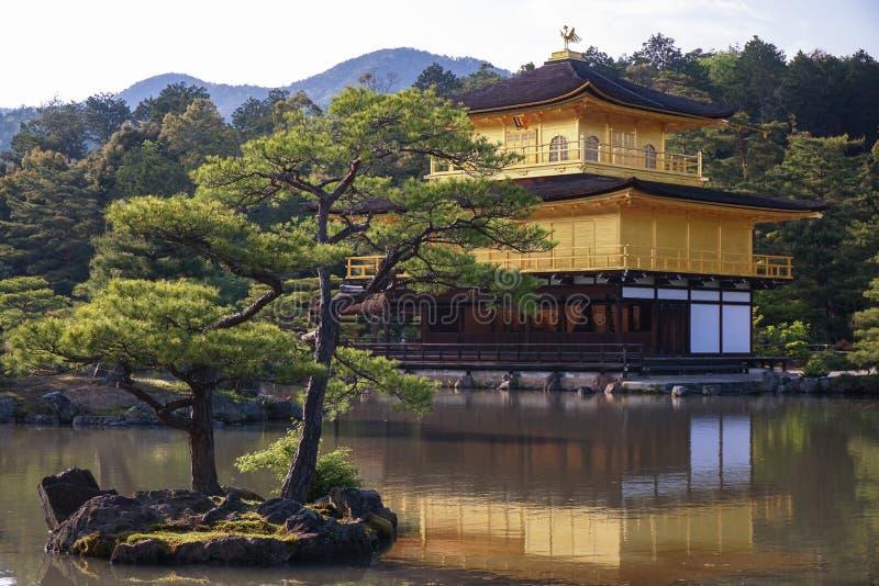 Japansk guld- tempel Kinkakuji och trädgård royaltyfri bild
