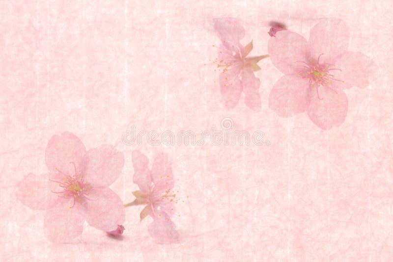 Japansk körsbärsröd blomning på rosa tappningpappersbakgrund arkivbild