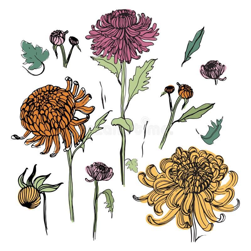 Japansk krysantemumuppsättning Färgrik samling med hand drog knoppar, blommor, sidor Tappning utformar illustrationen stock illustrationer