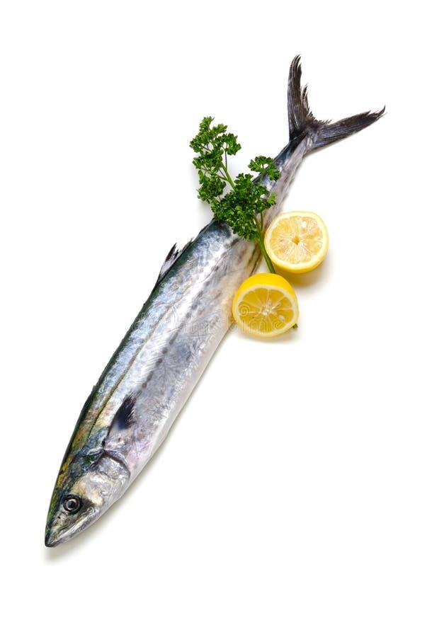 japansk mackerelspanjor royaltyfri foto