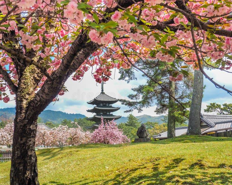 Japansk pagod med körsbärsröda blomningar royaltyfri fotografi