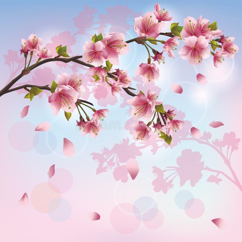japansk sakura för bakgrundsblomningCherry tree stock illustrationer