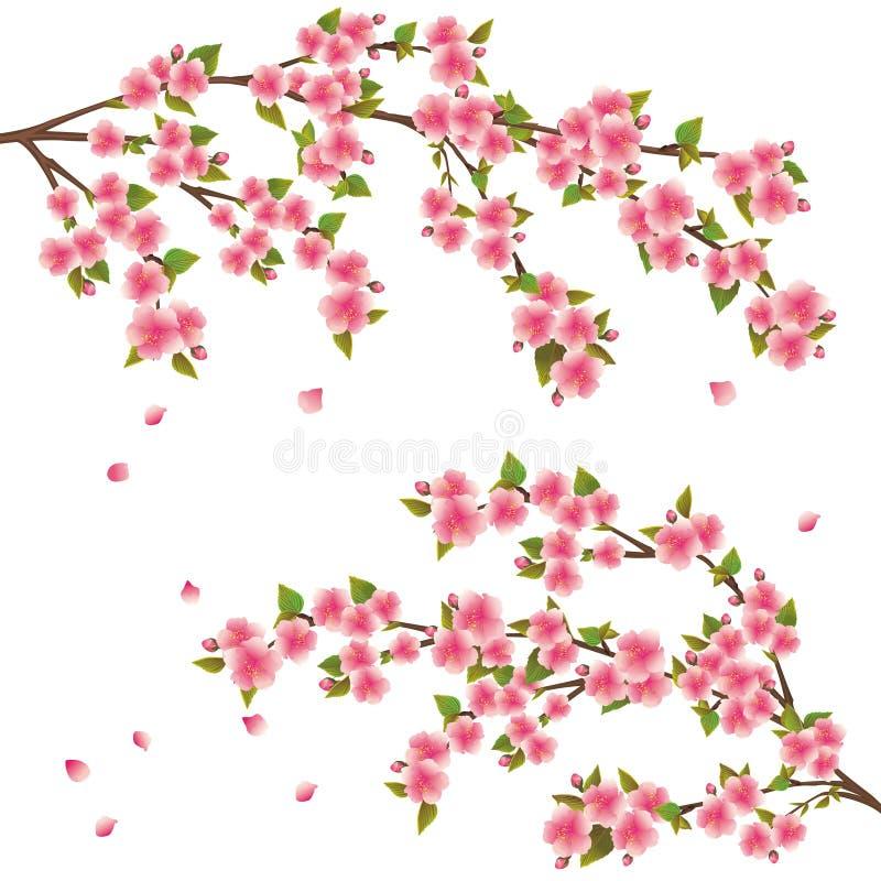 japansk sakura för blomningCherry tree vektor illustrationer