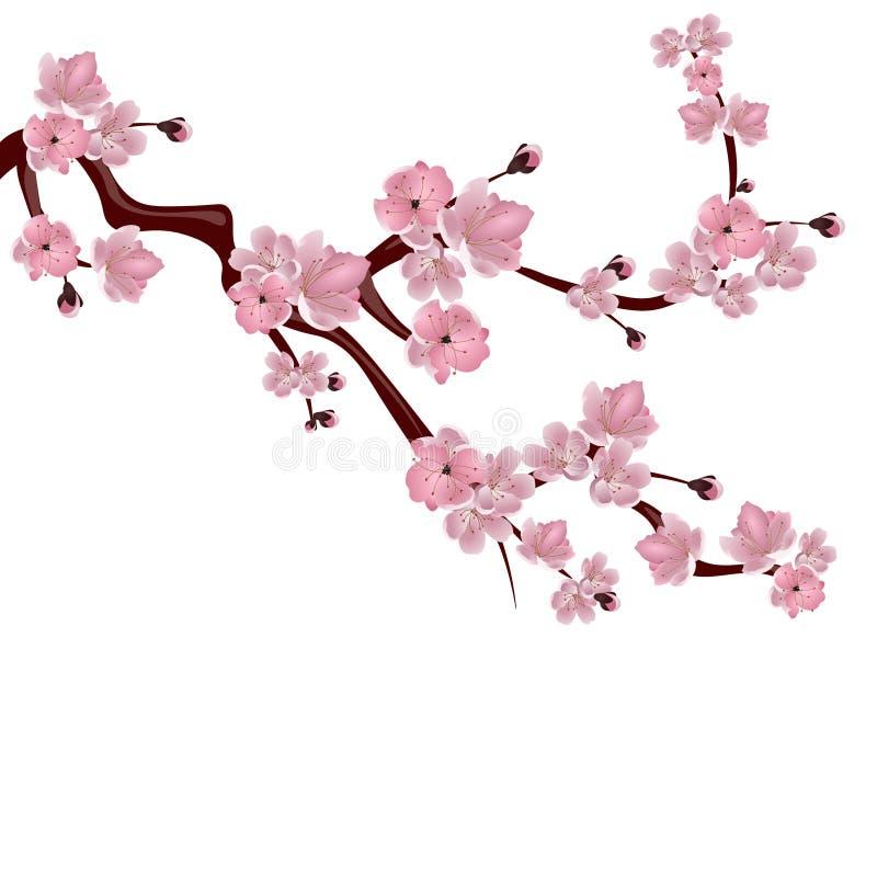 japansk sakura för Cherry tree En filial av den rosa körsbärsröda blomningen På vitbakgrund illustration stock illustrationer