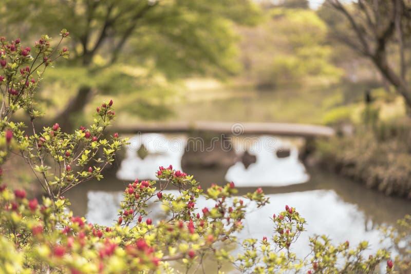 Japansk stenbro och blommabokeh på dammet av Rikugien arkivfoto