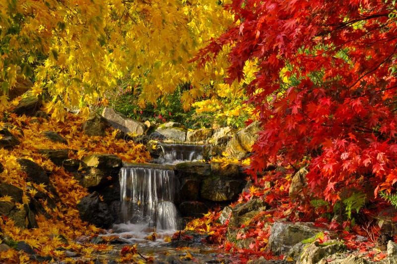 Japansk trädgård med röda och gula lönnträd nära en ström av vatten och den mycket lilla vattenfallet under färgrik höst arkivbilder