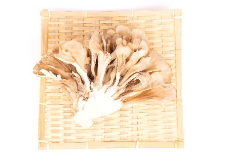 Japanska champinjoner på vit arkivfoto