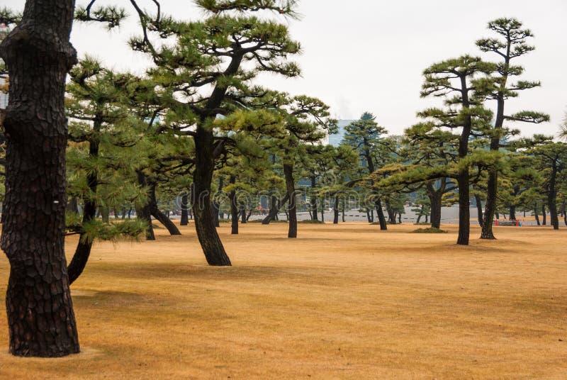 Japanska träd i Toyko, Japan Nära den imperialistiska slotten arkivfoto