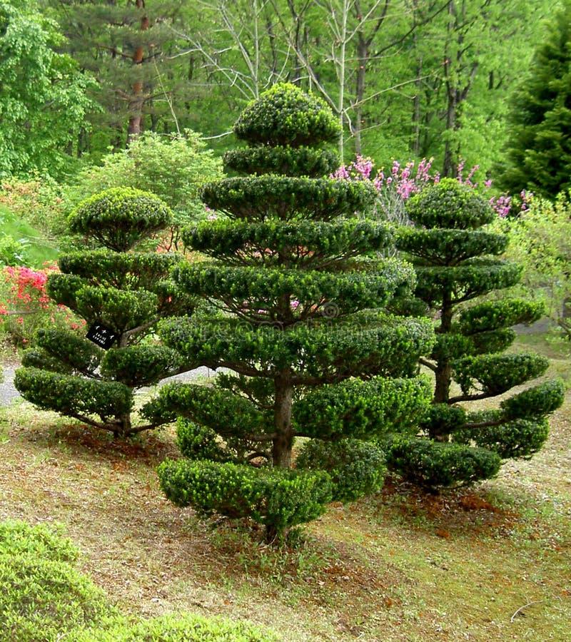 Japanska Trees Arkivbild