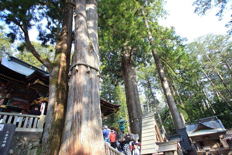 Japanskt gammalt cederträ i den Mitsumine relikskrin royaltyfria foton