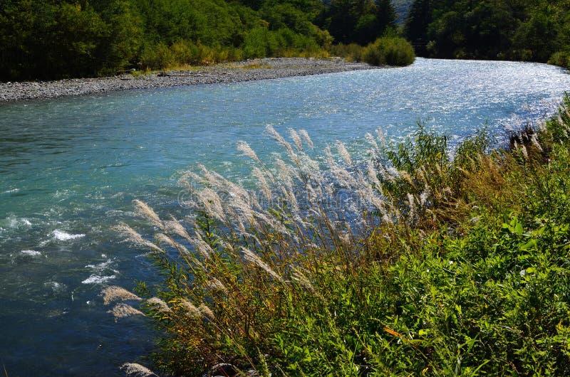 Japanskt silvergräs och flod, i höglands- Japan royaltyfri fotografi