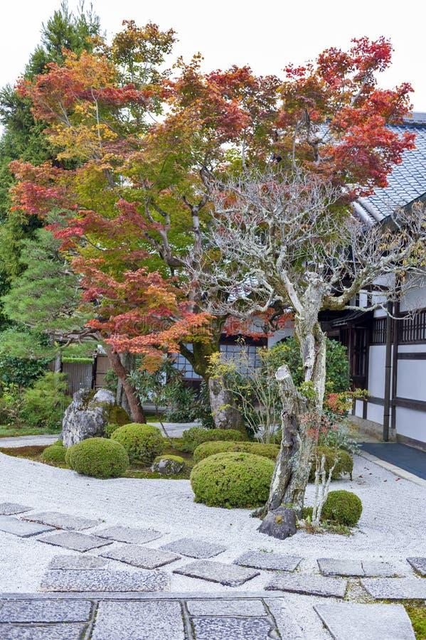 Japanskt träd för röd lönn under höst i trädgård på den Enkoji templet i Kyoto, Japan arkivfoton