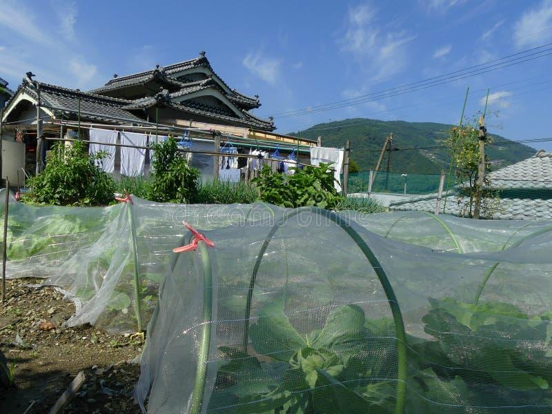 Japanskt traditionellt hus och trädgården royaltyfri foto