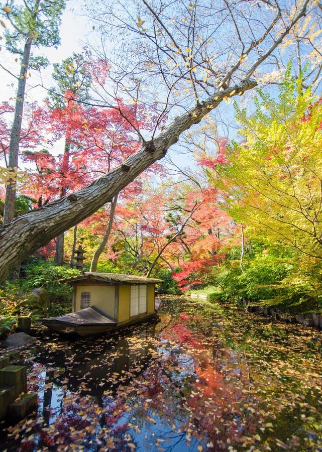 Japanträdgård i höst arkivbild