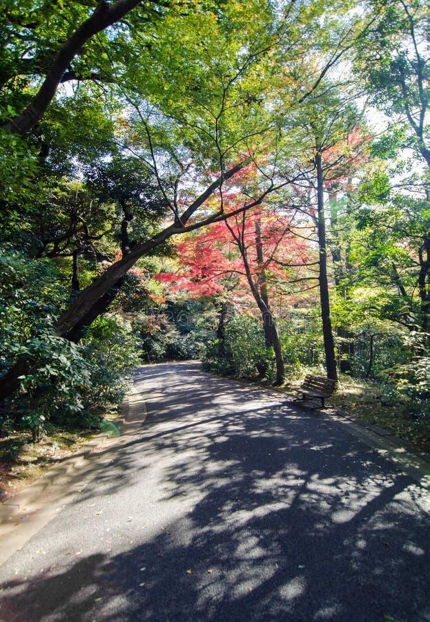 Japanträdgård i höst, Tokyo, Japan arkivfoto