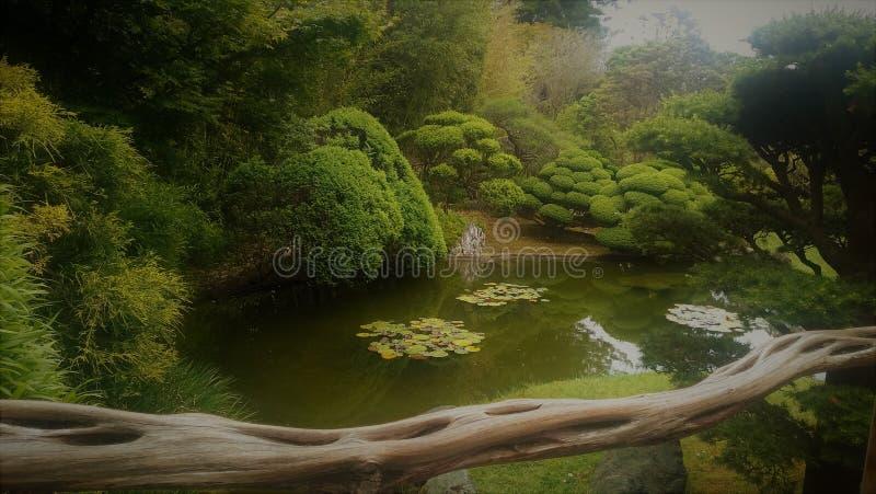 Japanträdgård med ett damm royaltyfri bild
