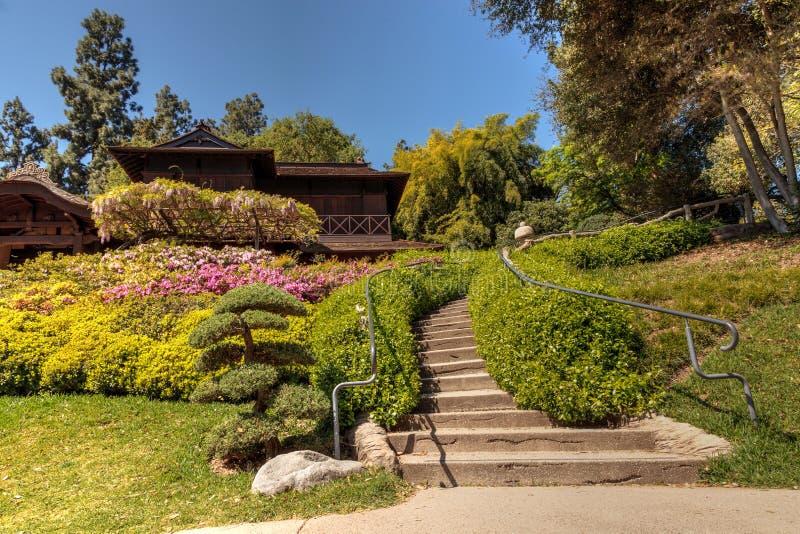 Japanträdgård på de Huntington botaniska trädgårdarna royaltyfria foton