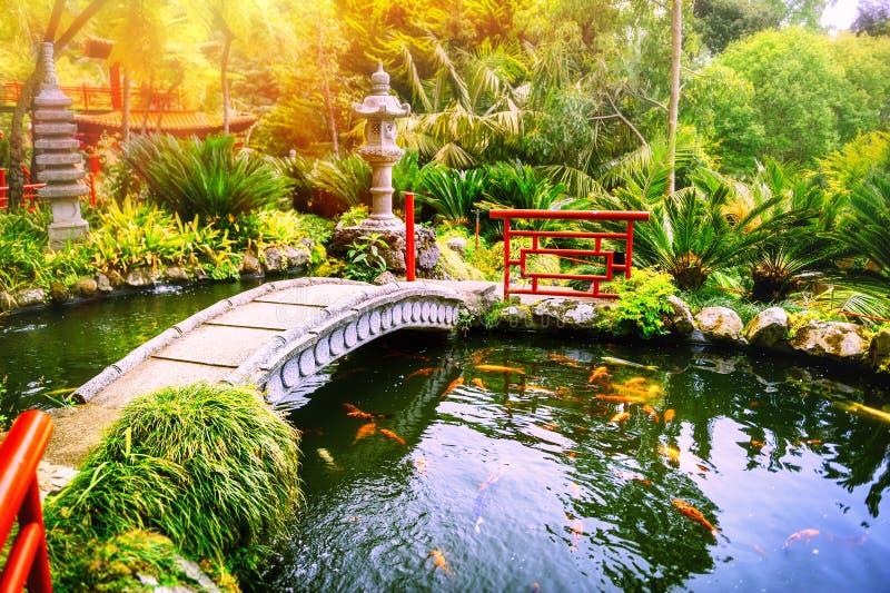 Japanträdgården med simningkoi fiskar i dammet arkivfoto