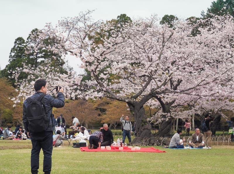 Japończyk cieszy się czereśniowych okwitnięć festiwal wewnątrz korakuen ogród zdjęcia royalty free