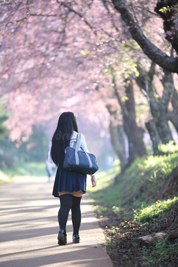 Japończyk dziewczyny szkolna suknia patrzeje Sakura kwiatu natury przejście zdjęcia stock