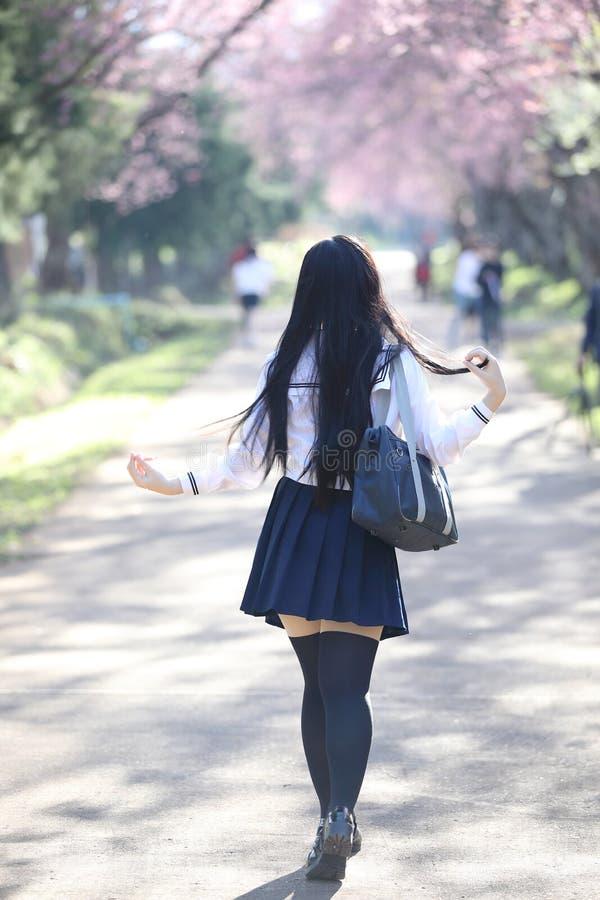 Japończyk dziewczyny szkolna suknia z Sakura kwiatu naturą obraz stock