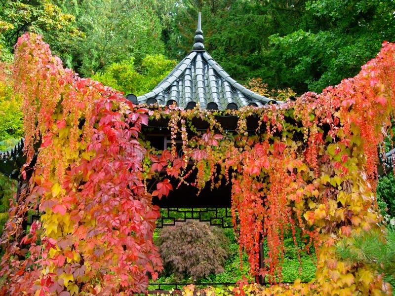 Japończyk Ogrodowa pagoda Chująca draperią winogrady obrazy royalty free