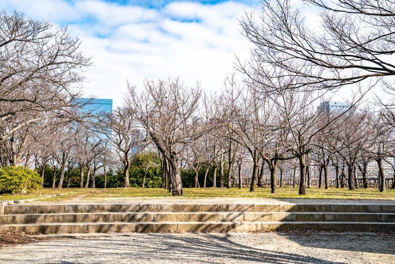 Japończyk, turyści, podróżnicy chodził wokoło Osaka kasztelu parka w Mar 2018 z suchym drzewem wokoło, Oaska, Japonia obrazy royalty free