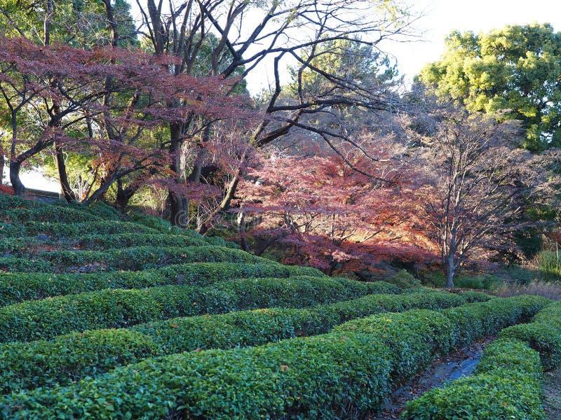 Japończyka żywopłotu ogrodowi rzędy przy Cesarskim wschodem uprawiają ogródek w w centrum Tokio zdjęcia royalty free
