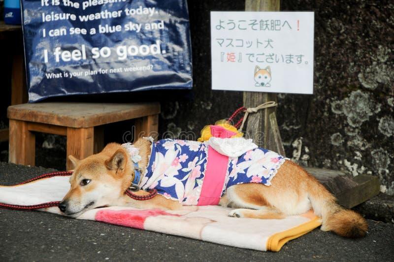 Japończyka Psi dosypianie na ulicie w Shizuoka, Japonia Znak mówi ten powitanie! Jej imię jest Princess, nasz maskotka pies W lat fotografia royalty free