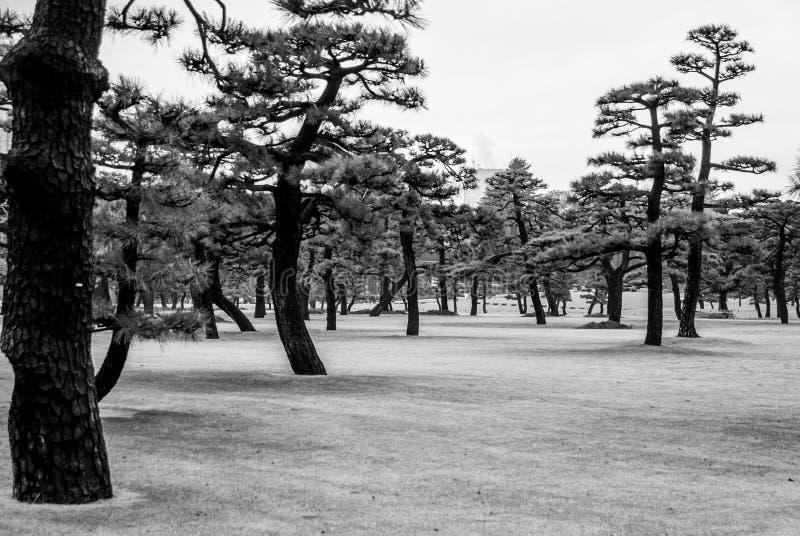 Japońscy drzewa Wabi Sabi Ki, Tokio pałac okręg - obraz royalty free