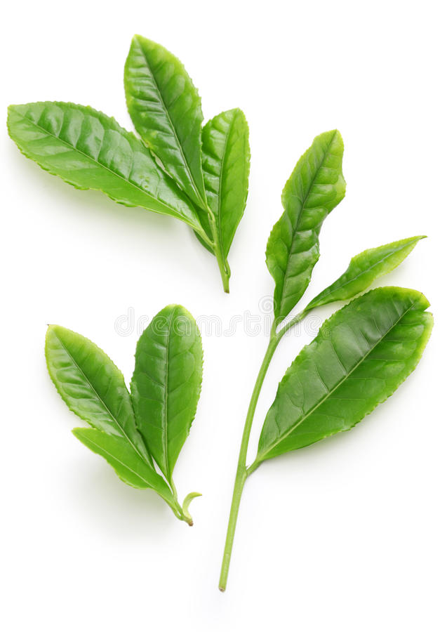 Japońscy zielonej herbaty najpierw sekwensu liście fotografia royalty free