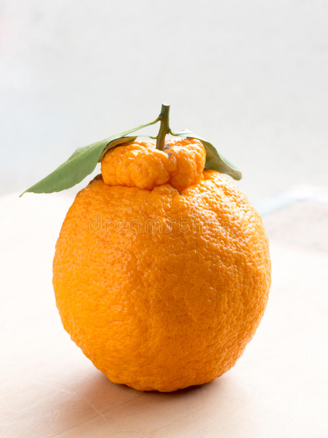 Japońska kuchnia, Japońska cytrus owoc zdjęcie stock
