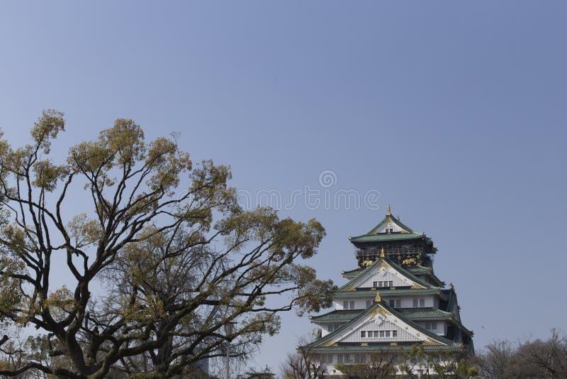 Japońska sosna w Osaka kasztelu w Japonia na słonecznym dniu obrazy stock