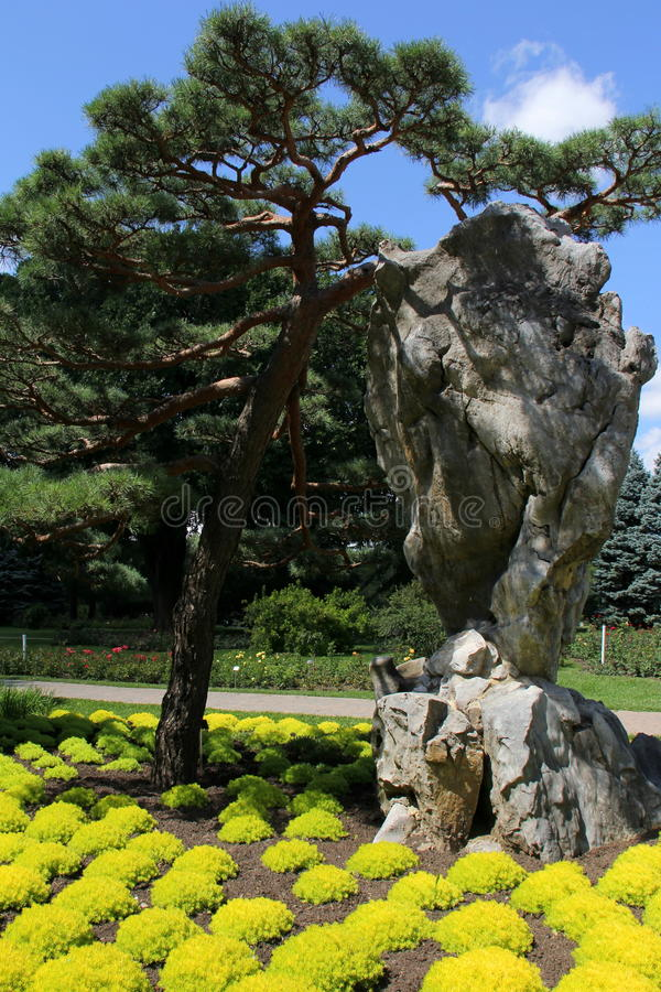 Japoński drzewo zdjęcie stock