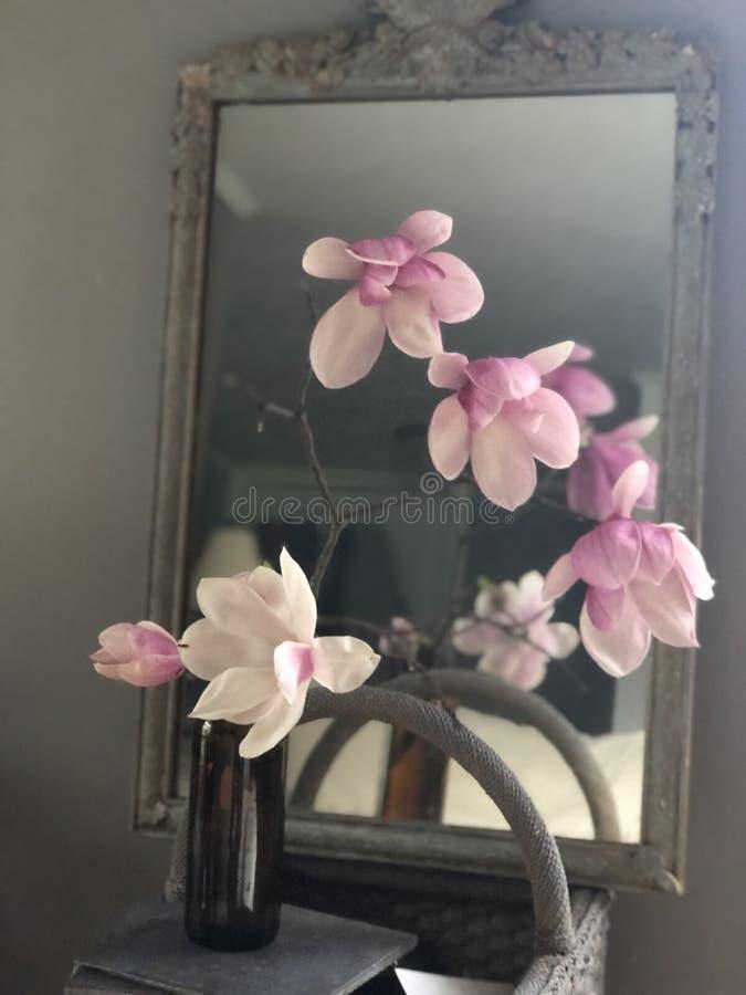 Japoński Magnoliowy przygotowania zdjęcia stock