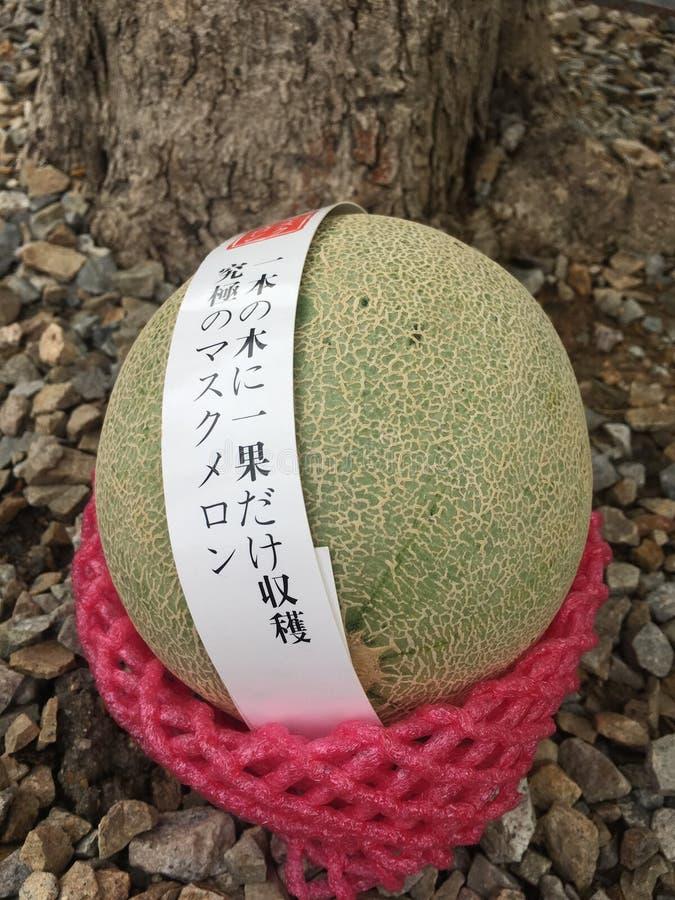 Japoński melonowiec obraz royalty free