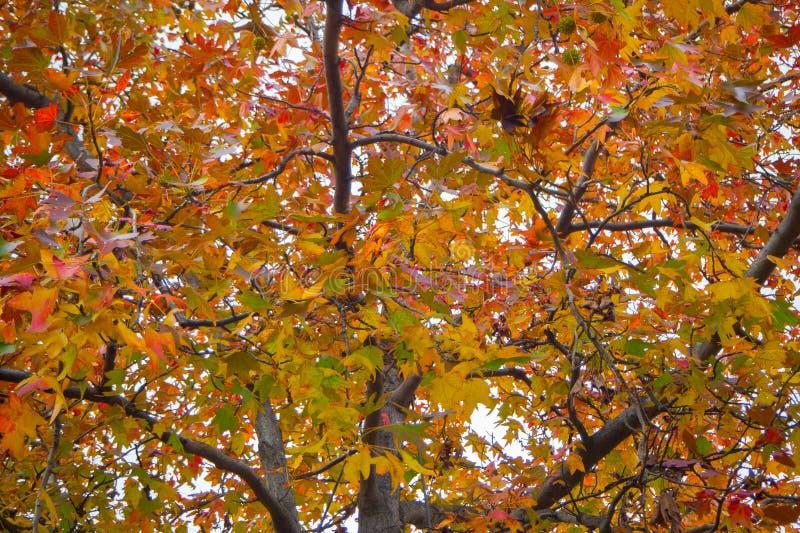Japoński parkowy jesień las w Tokyo wizerunku zdjęcia stock